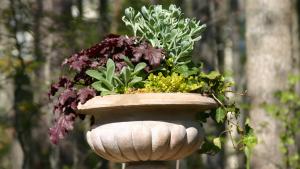 perennial plants for backyard