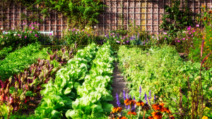 edible landscaping for your backyard